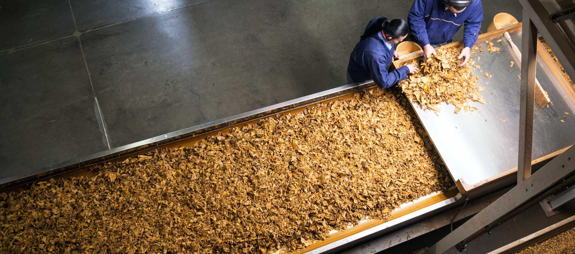 Gulf Tobacco Processing Line